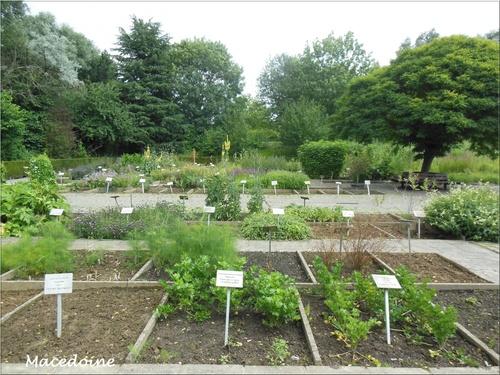 Le jardin des plantes médicinales 2