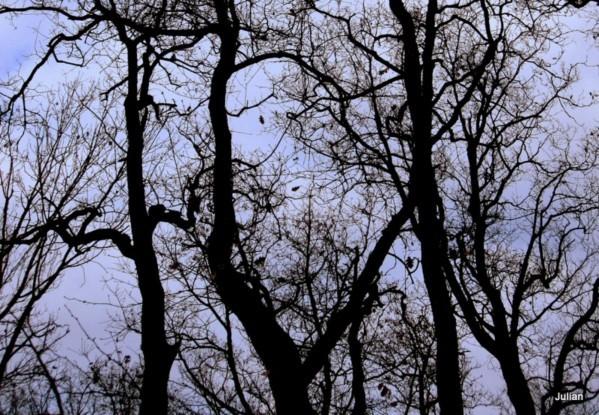 y02 des branches