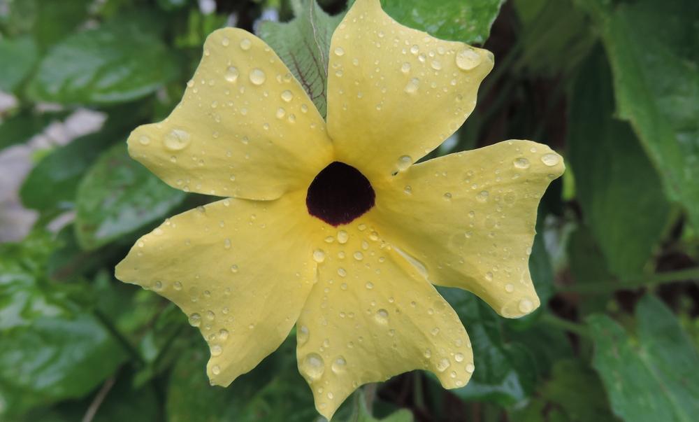 une fleur et des goutelettes