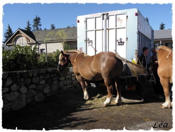 P8213379 chevaux