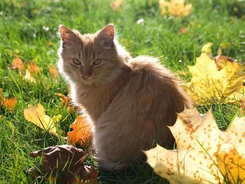 chat-d-automne-9.jpg