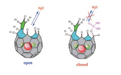 Ce Fullerène en forme de récipient contient une seule molécule d'eau