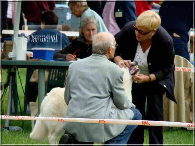 Exposition canine Sorges-en-Périgord CACS, 8 septembre 2008