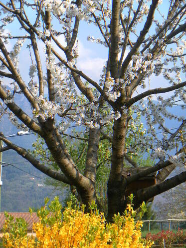 arbres jeu khanel