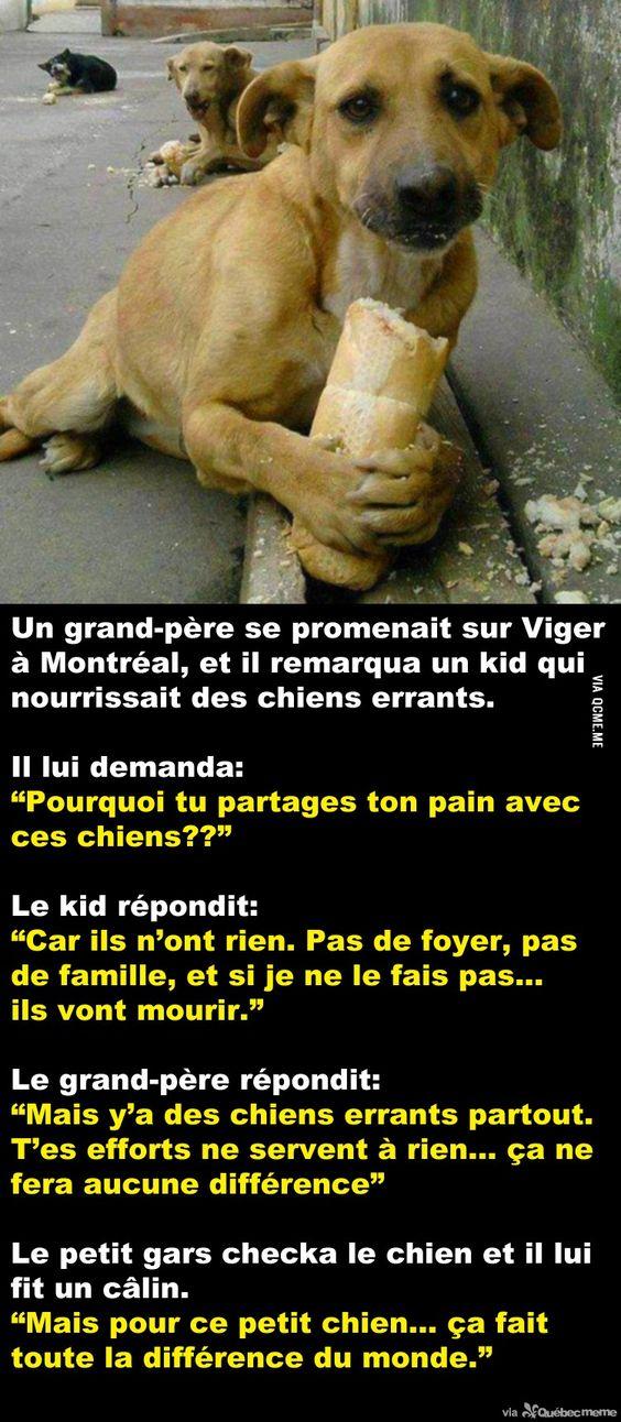 Un grand-père se promenait sur Viger à Montréal, et il remarqua un kid qui nourrissait des chiens errants...