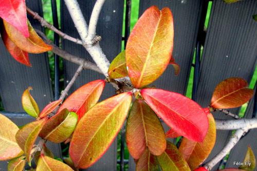 Des feuilles et des couleurs