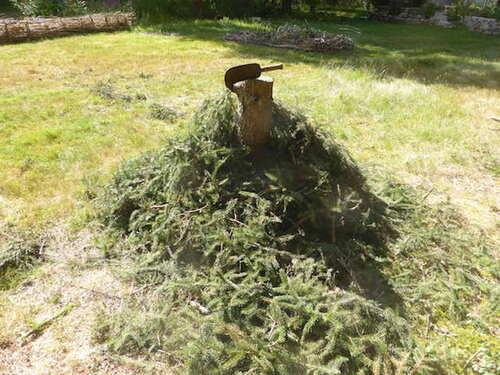 - Pensée du dimanche - Un arbre qui tombe ... -