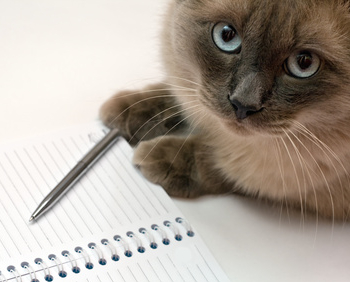 Journal intime du chat