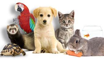 Les animaux ont-ils un 6ème sens ?