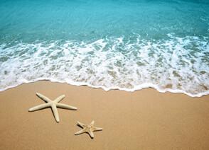 Étoile de mer sur une plage de sable