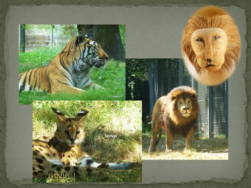 Le parc animalier de Thoiry (2)