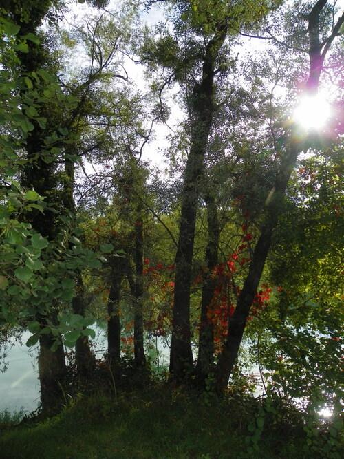 Ombres et lumières de l'automne
