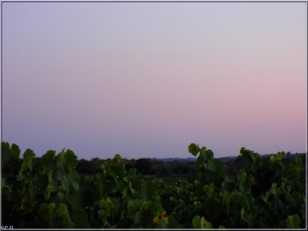 Heure bleue en Garrigue