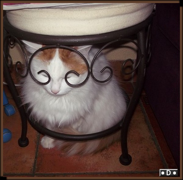 Oscar .... le chaton maltraité