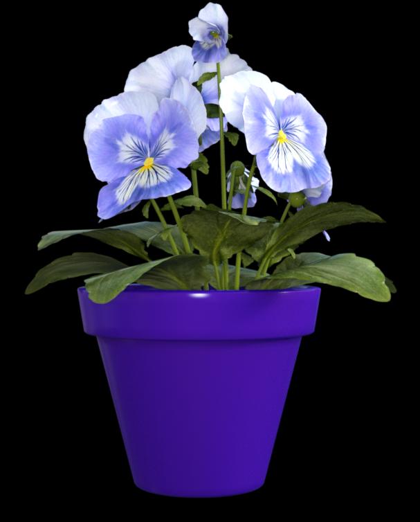 """Image de fleurs """"pansées"""" (tube-render)"""