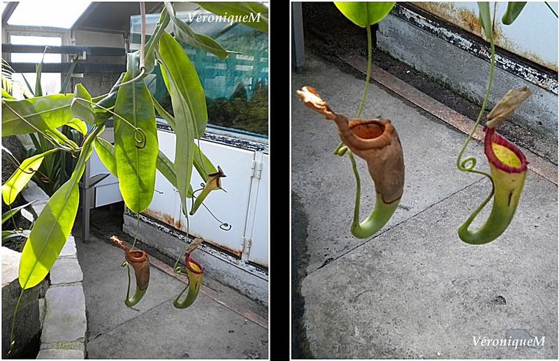 Les Serres d'Auteuil : Quelques plantes ...