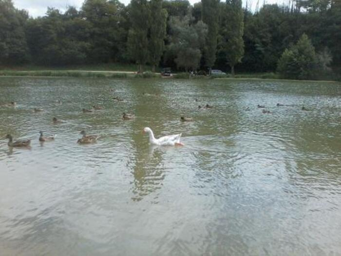 un magnifique lac