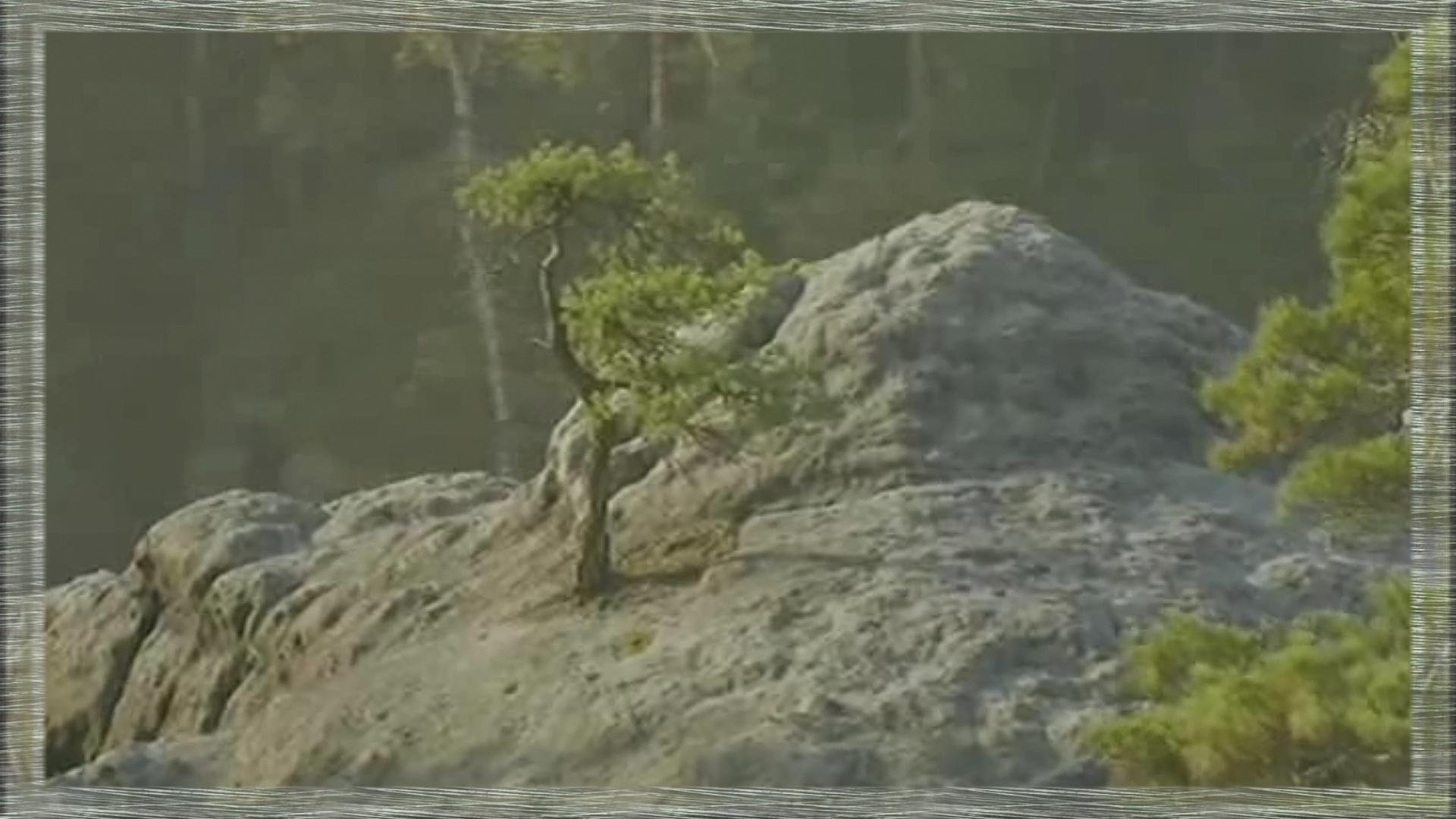 arrêtes rocheuses et pins