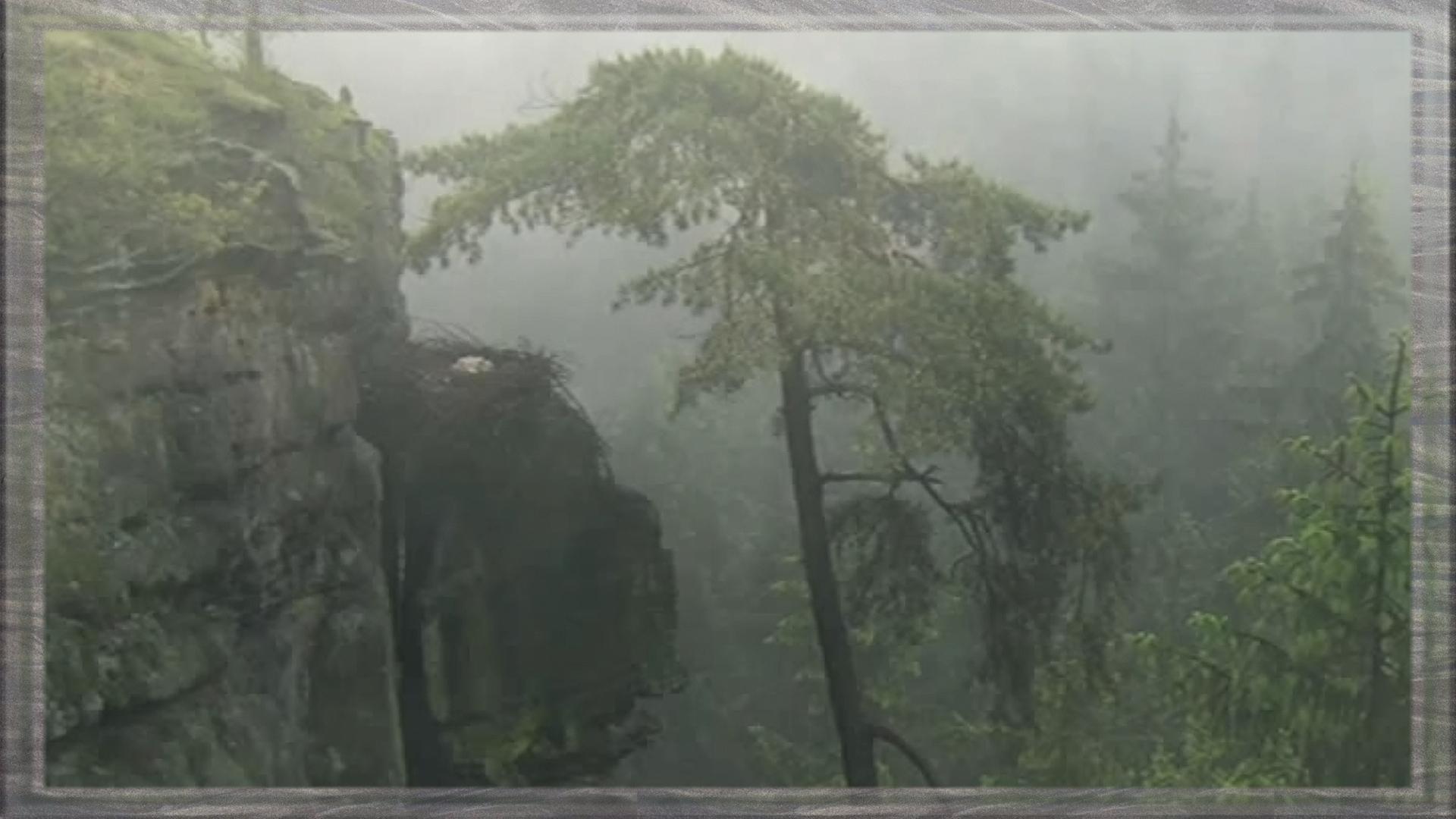 brouillard et nid