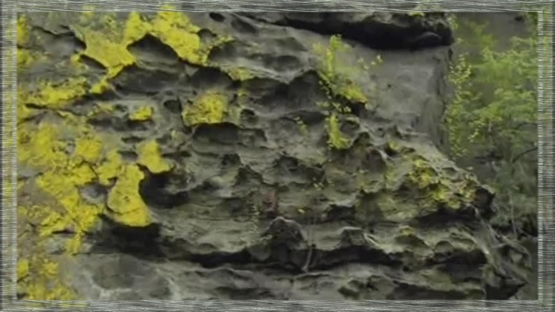 lichens jaunes sur paroi rocheuse