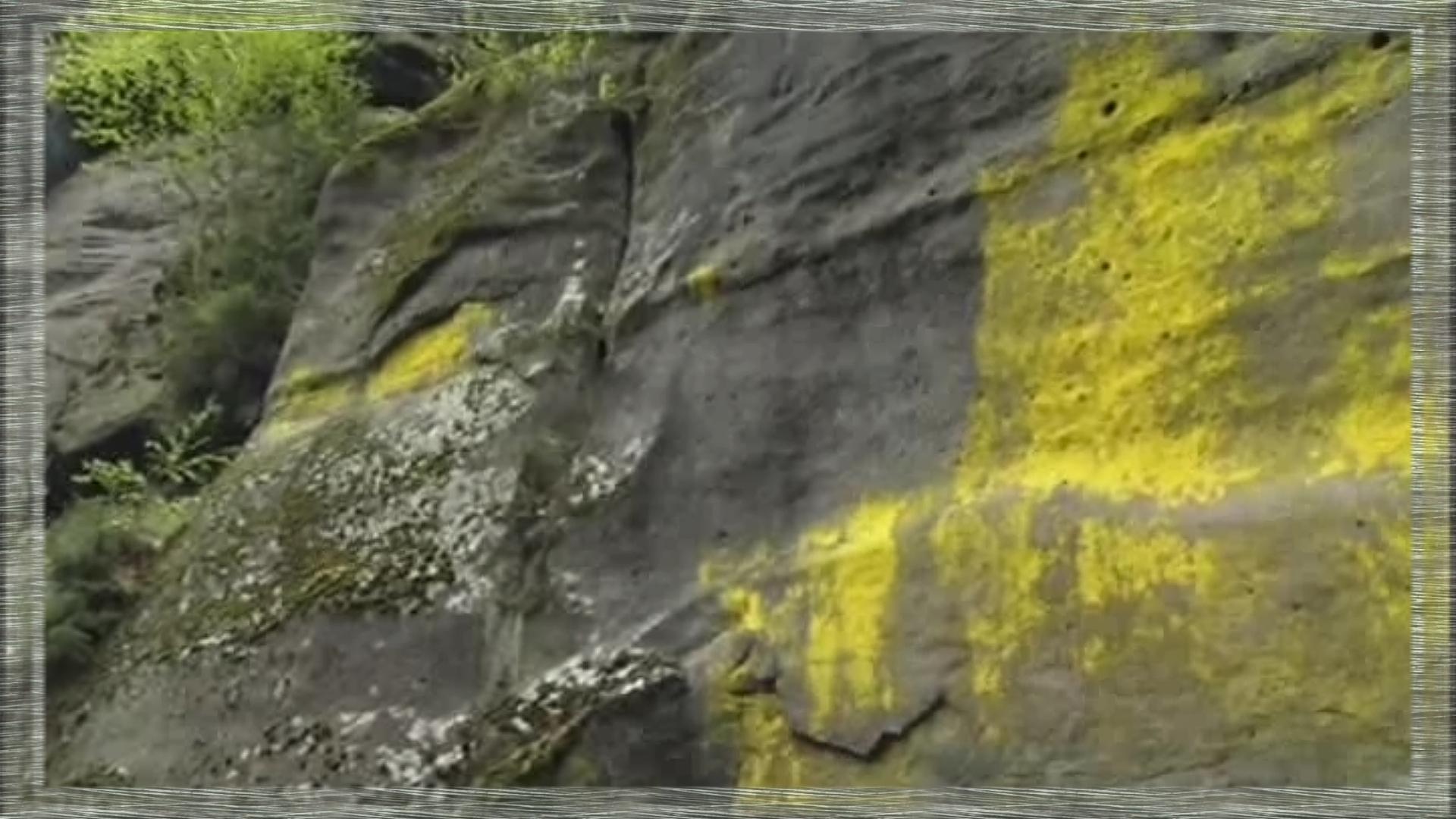 lichens jaunes