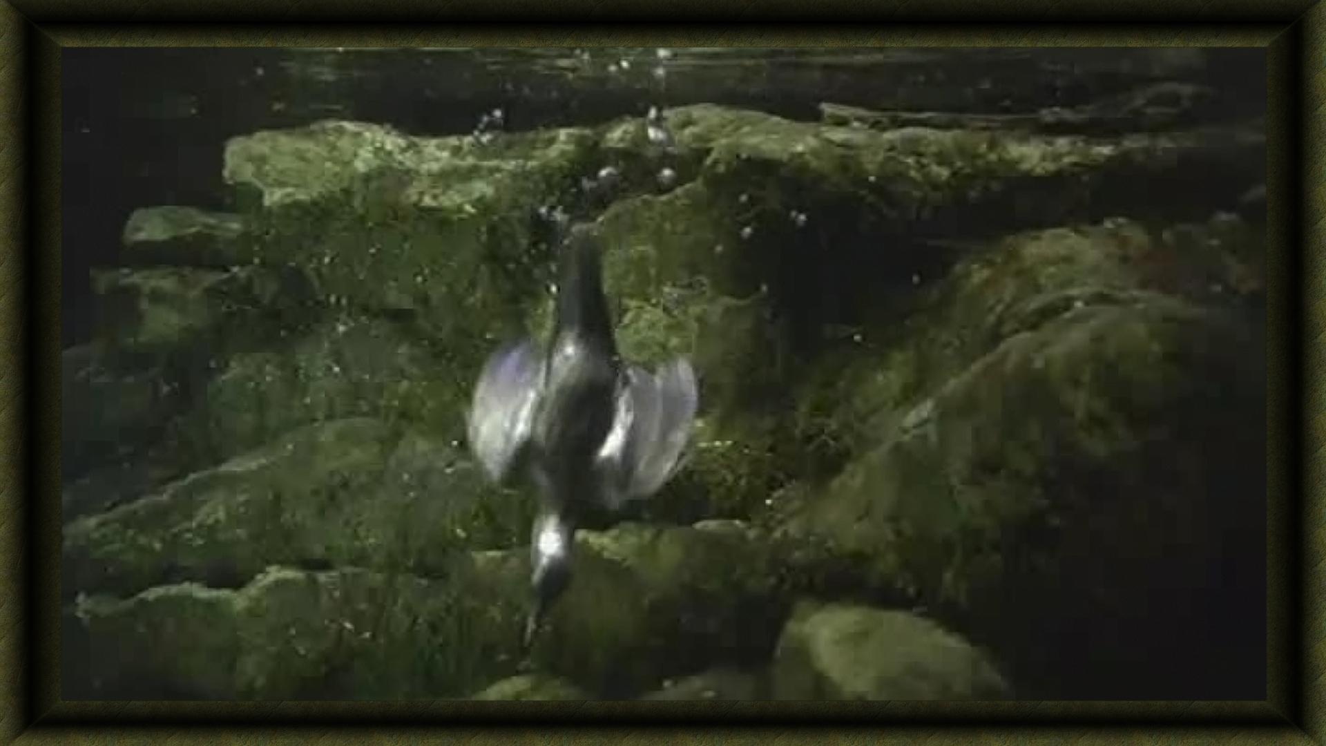 passereau sous l'eau