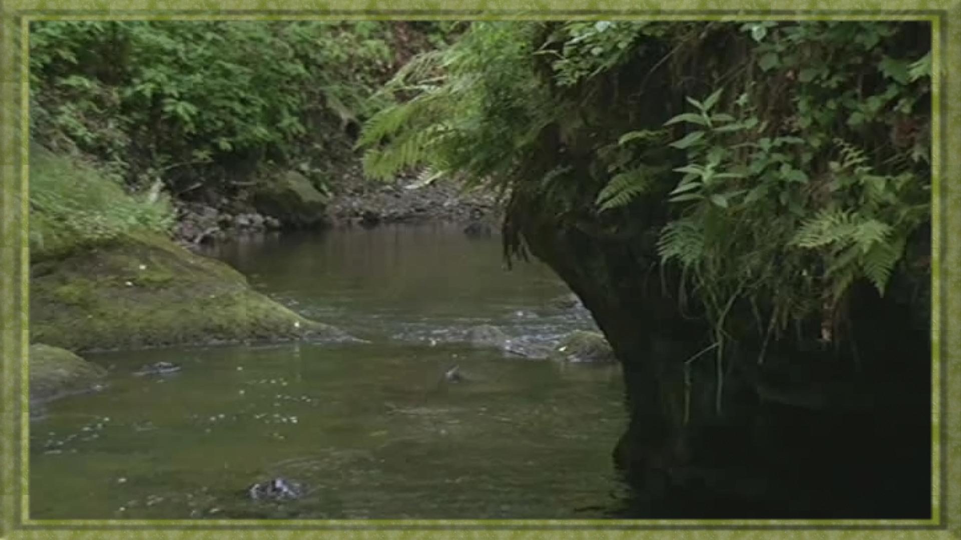 rivière au coeur des gorges