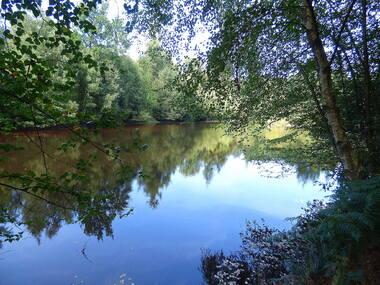 Les étangs (Un bol d'oxygène)