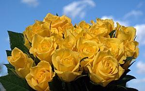 roses-jaunes.jpg