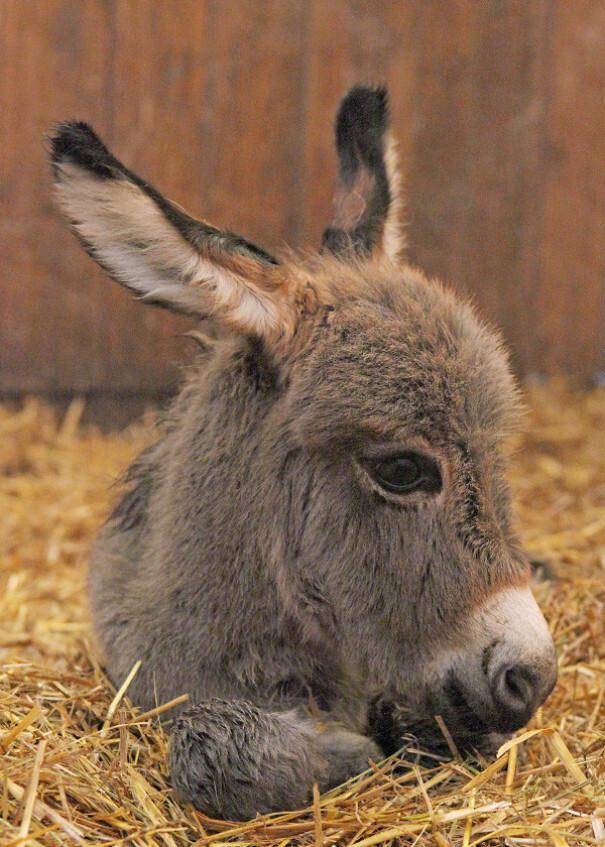 Si jamais vous êtes triste, ces 20 bébés ânes mignons vous feront assurément sourire – ipnoze