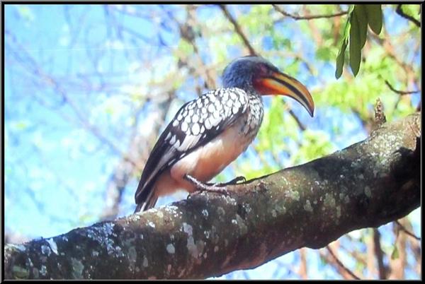 """François et Marie-Geneviève Poillotte ont  présenté une superbe conférence sur le """"parc national  Kruger"""""""