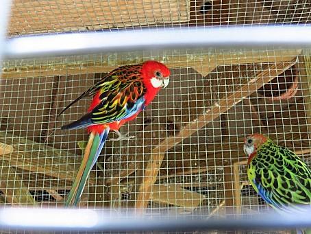 les-oiseaux-et-autres-volatiles-0124.JPG