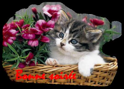 Blog de lisezmoi :Hello! Bienvenue sur mon blog!, bonne soiree à tous