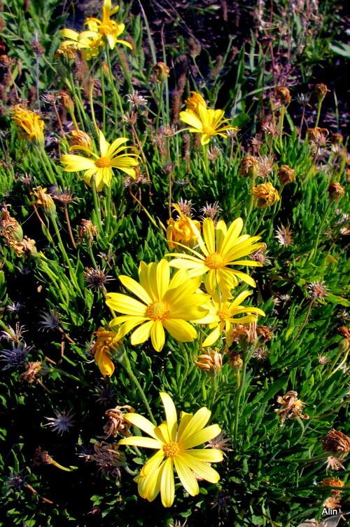 Belles fleurs jaunes