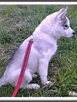 Okami (3 mois)