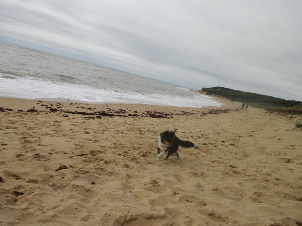 Promenade un jour de grande marée