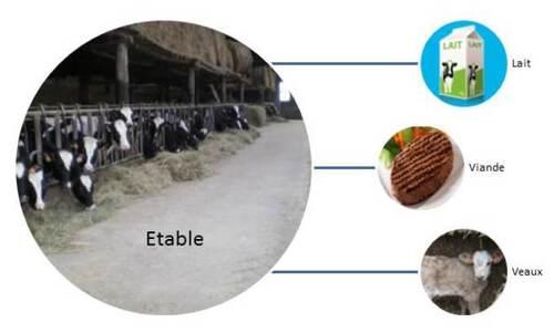 """Chaque étable est destiné à """"une classe"""" de vache (lait, viande, veaux)"""