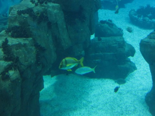 L'aquarium de Lisbonne