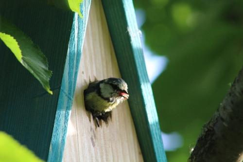 Le départ du nid est éminent