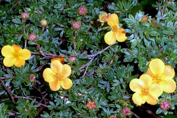 L04 - Fleurs jaunes