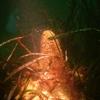 _plongee la ciotat 2010 006 [1024x768].JPG
