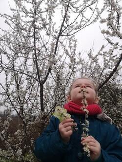 Lila jour de printemps