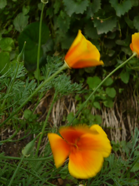 Les petites fleurs au jardin lacalobra for Fleurs thes au jardin