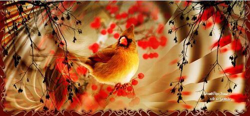 Top L'Oiseau
