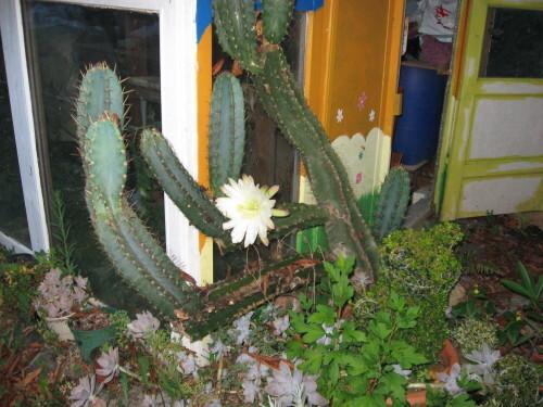 Mes-fleurs-et-le-potager-3613.JPG