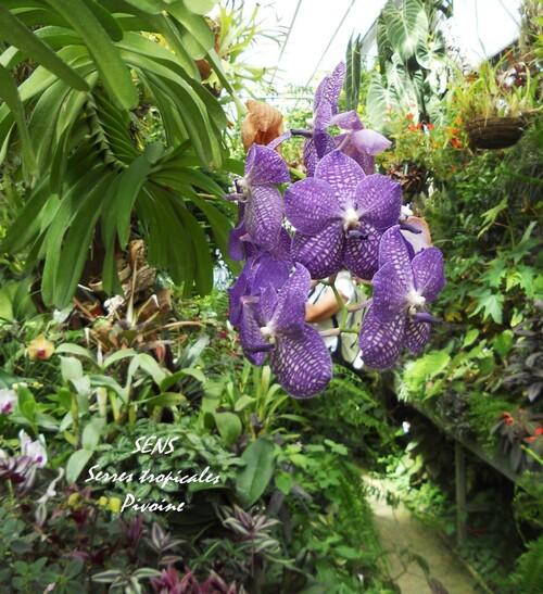 SENS : les serres tropicales du Parc du Moulin à Tan