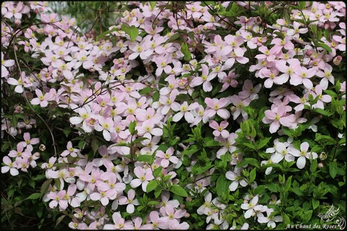 promenade de fleurs en fleurs (1)