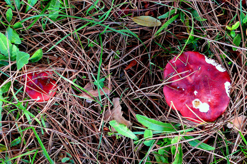 Des champignons sur le bord d'un chemin!