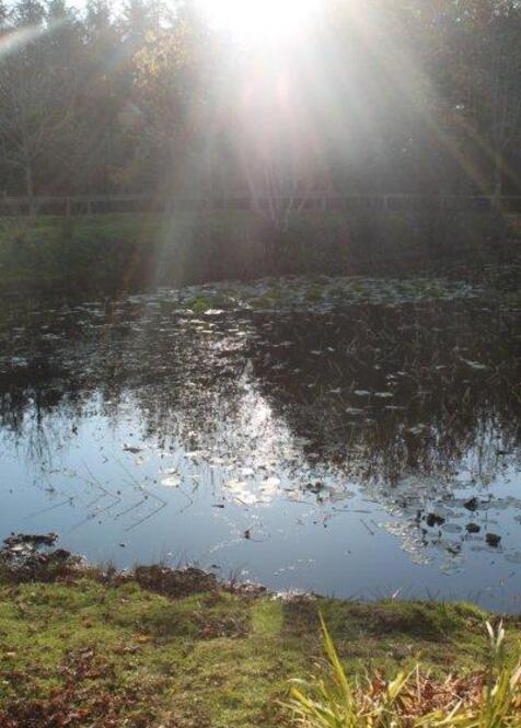 jardin à St Urbain 035