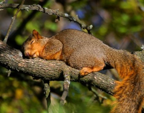 La sieste des animaux